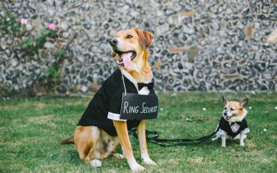 6 Ways to Make Your Dog a Part of Your Wedding & Keep them Safe [the ultimate guide]