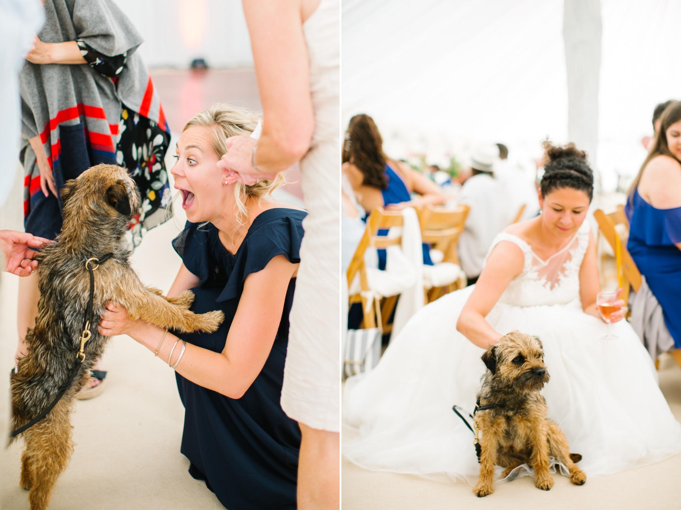 dog at a brook farm hertfordshire wedding