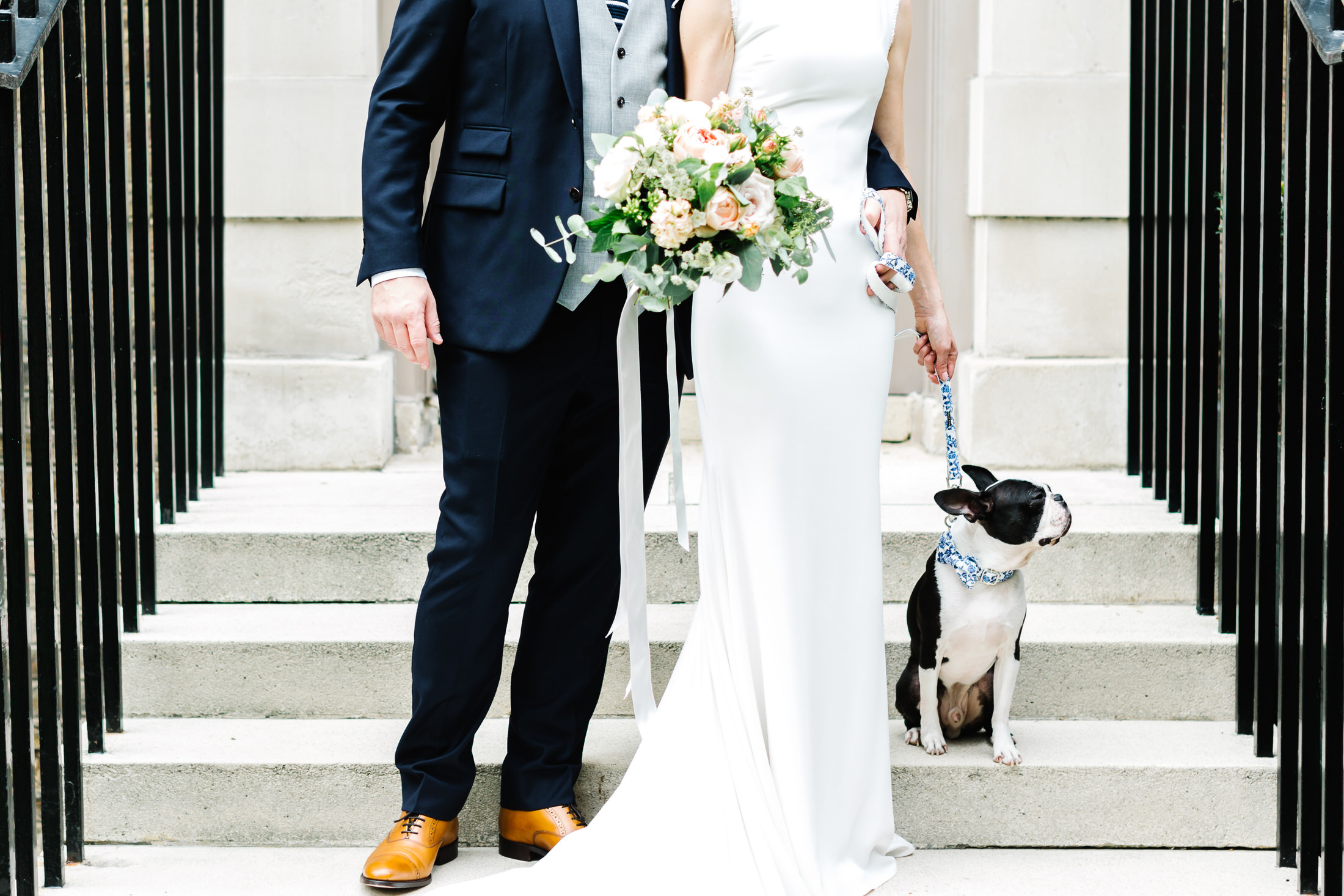 dog at a london wedding