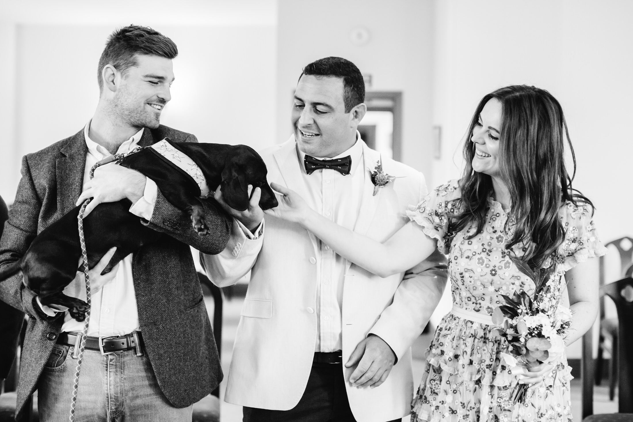 dog at st albans registry office wedding
