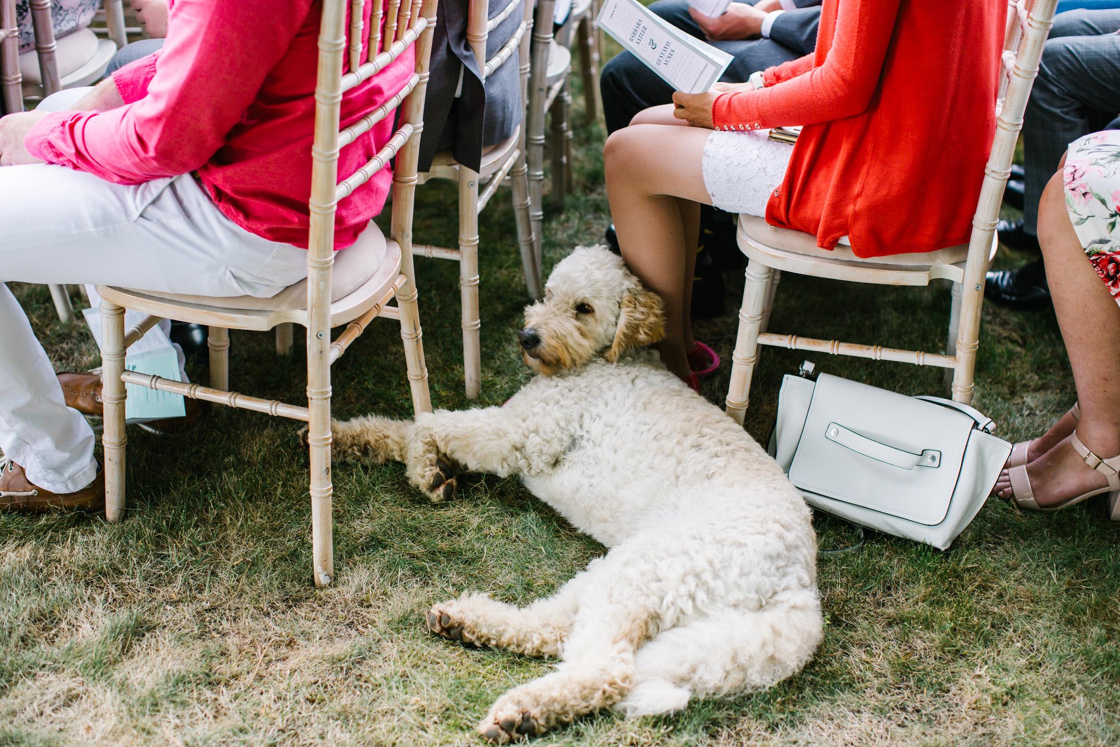 dog at a back garden wedding hertfordshire