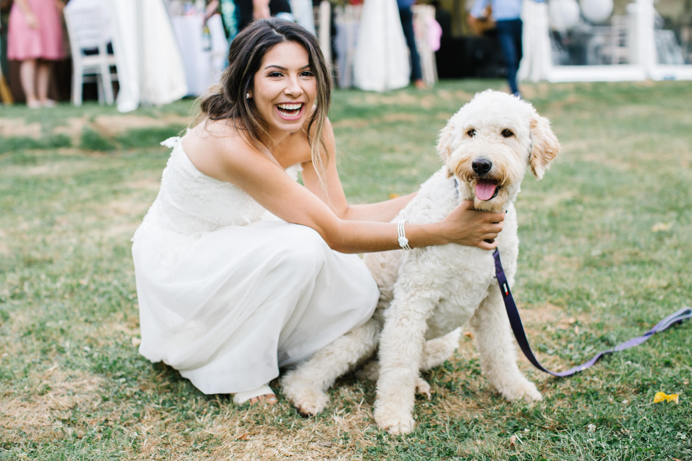 how to plan a wedding with your dog hertfordshire